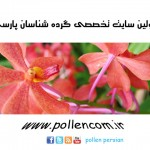 first persian pollen